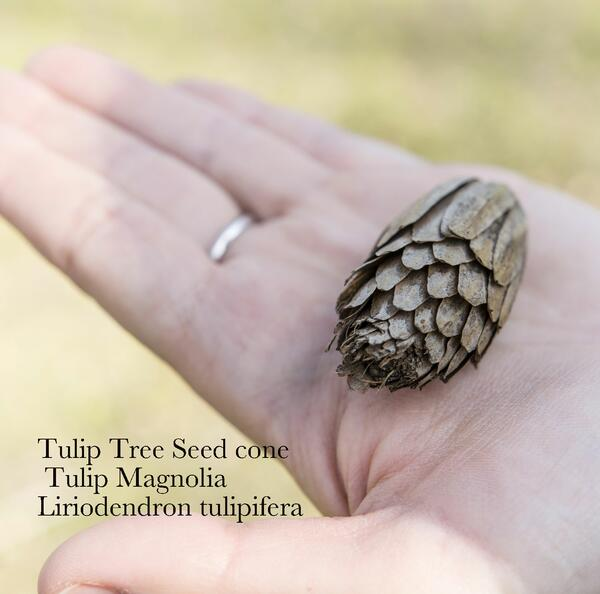 January Seed Packet of the…